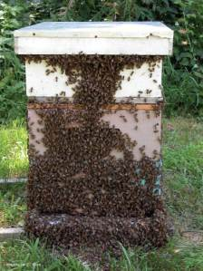 honey-bee-hive